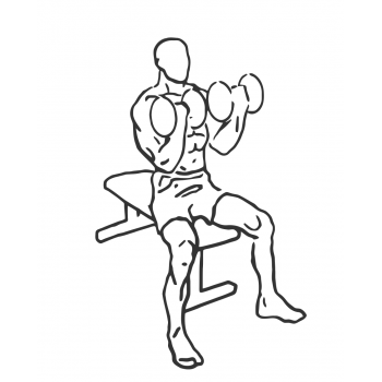 Seated Dumbbell Curl - Step 2
